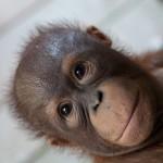 Kalimantan, Borneo, Indonesia