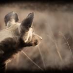 Sabi Sands Game Reserve, South Africa